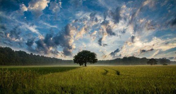 tree-247122_640