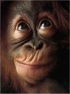 Monkey - Who, Me?