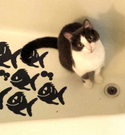 GERTIE CAT IN THE TUB